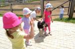 Kids Palace in vizita la Zmei (6)