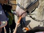 Primaria Sectorul 2 - Centrul de Zi pentru Copiii cu Dizabilitati (16)