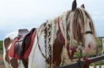 10-11 mai la cai (2)