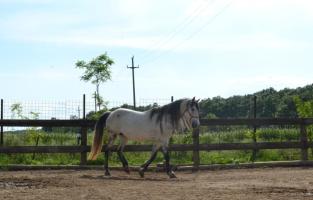 zi de cai - hai sa invatam sa calarim !! (13)