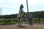 zi de cai - hai sa invatam sa calarim !! (14)