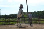 zi de cai - hai sa invatam sa calarim !! (16)