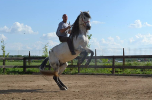 zi de cai - hai sa invatam sa calarim !! (18)