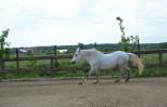 zi de cai - hai sa invatam sa calarim !! (7)