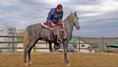 programul caii romaniei (2)