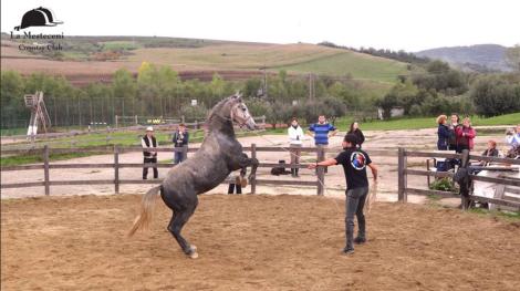 programul caii romaniei (4)
